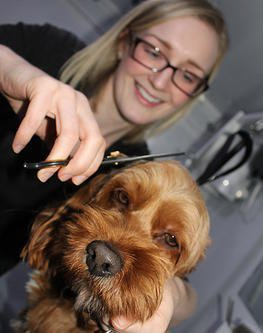 Dog Smart Mobile Grooming Van Conversion